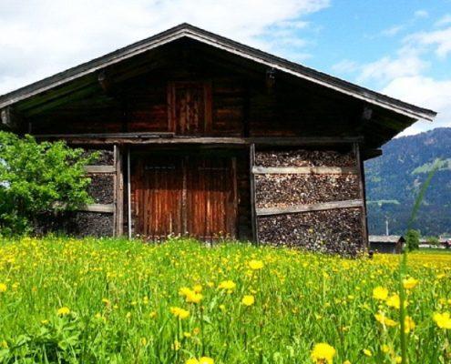 Holzhütte mit Blumenwiese in St. Johann in Tirol