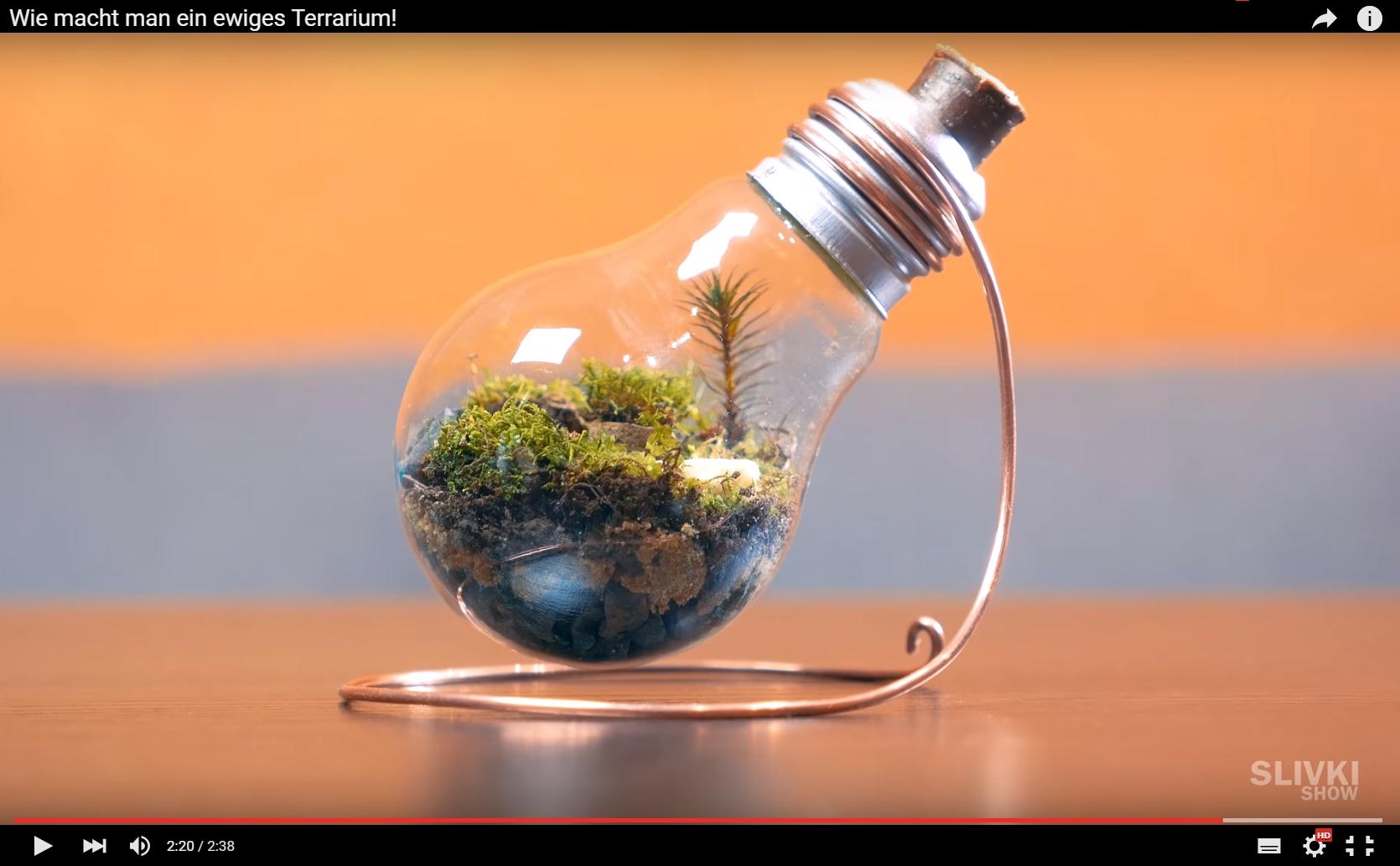Terrarium Aus Einer Gluhbirne Okosystem Kreativ Blog Diy Gadgets