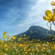 Frühling in Kirchdorf in Tirol