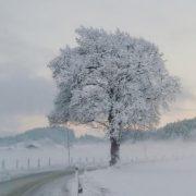 Verschneiter Baum im Hinterkaiser