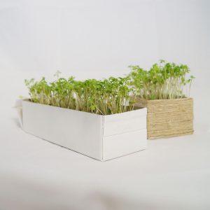 DIY Mini Garten für die Küche