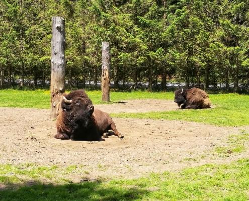 Wild- und Erlebnispark Ferleiten