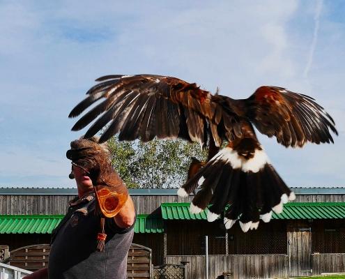 Greifvogelshow im Bayern-Park - Erlebnispark in Bayern