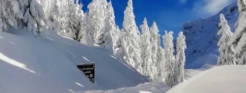 tiefverschneite Bäume bei der Stanglalm