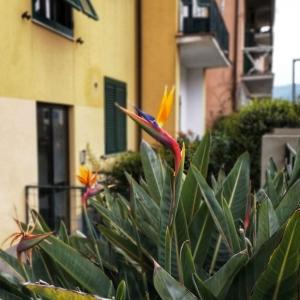 Strelitzien in Elba