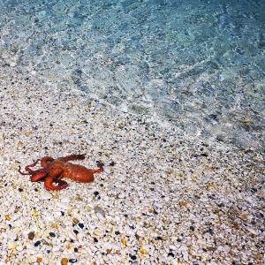 Tintenfisch am Strand in Elba