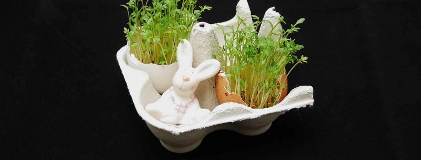 Kresse in der Eierschale