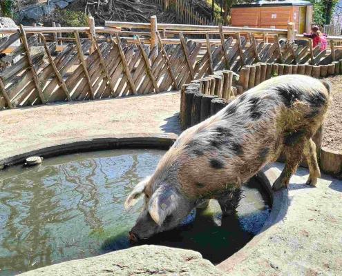 Alpenzoo Innsbruck - Zoo in Tirol